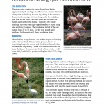 Science Writing - Flamingo Pairs and Their Chicks